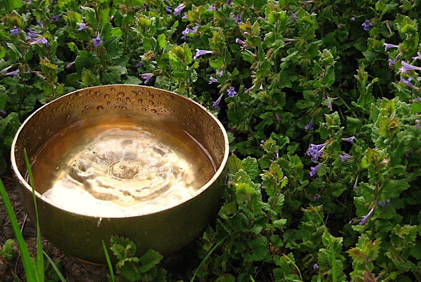 Eine Klangschale, mit Wasser gefüllt, auf dessen Oberfläche die Form einer Blüte zu erkennen ist.